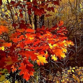 Elizabeth Tillar - Vestiges of Autumn