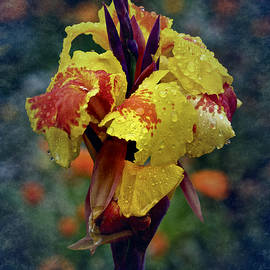 Richard Cummings - Vintage Canna Lily