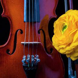 Violin And Ranunculus - Garry Gay