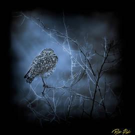 Western Owl Gloom by Rikk Flohr