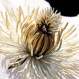 Colin Hunt - 10062 White Flower
