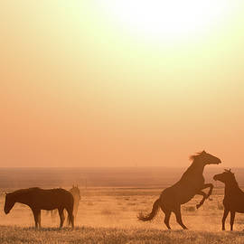 Wild Horse Sunset by Wesley Aston