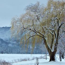 Wild Thing - Winter Gold