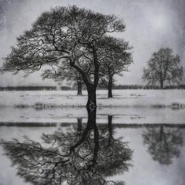 Winter Lake by Ian Mitchell