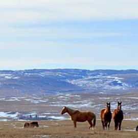 Ed Mosier - Winter pasture