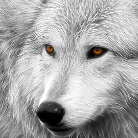 Steve McKinzie - Wolf