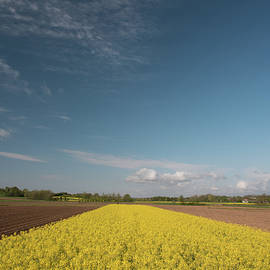 Nicola Simeoni - Yellow fields of rapeseed