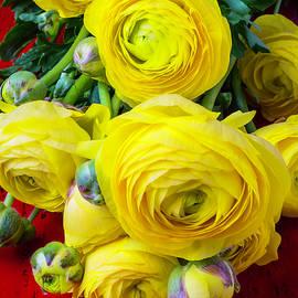 Garry Gay - Yellow Ranunculus