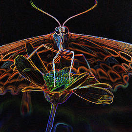 Pamela Williams - 10990 Neon Butterfly