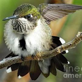 Cindy Treger - Ruby-throated Hummingbird