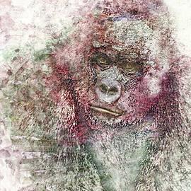 Pamela Williams - 11028 Mr Gorilla