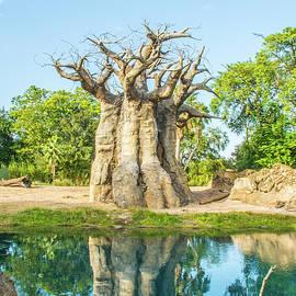 Pamela Williams - 11055 Baobab Tree