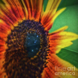 Colin Hunt - 11270 Sunflower Abstract Flipped