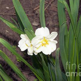 Elvira Ladocki - spring flowers