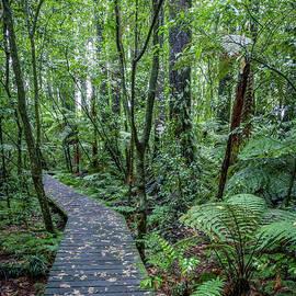 Forest boardwalk - Les Cunliffe