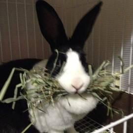 Happy Rabbit Jp - Instagram Photo