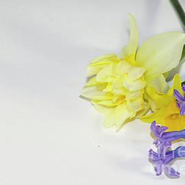 Elvira Ladocki - colorful flowers