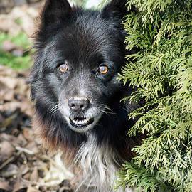 Elvira Ladocki - My Dog