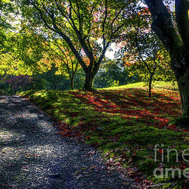 Ian Mitchell - Autumn Sunlight