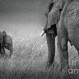 Baby Elephant by Charuhas Images
