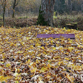 Michal Boubin - Bench covered in fallen leaves