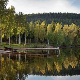 Birches And Reflection by Aivar Mikko