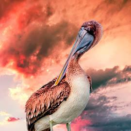 Rick Higgins - Brown Pelican