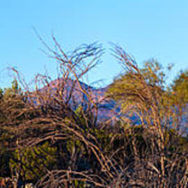 Bill  Robinson - Bunyeroo Valley