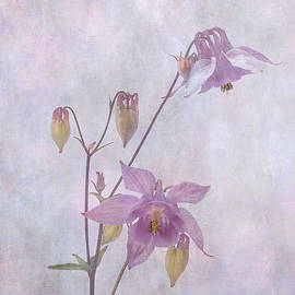 Columbine by Robert Murray