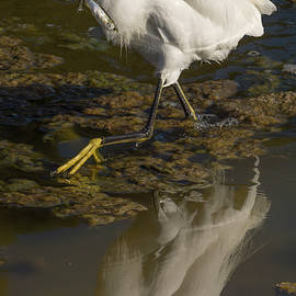 Bruce Frye - Egret with Fish Reflected