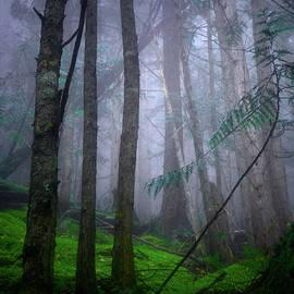 Tara Turner - Forest Mysteries