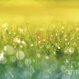 Rachel Cohen - Here Comes the Sun