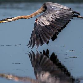 William Krumpelman - Heron Reflections