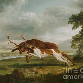 Hound Coursing A Stag by George Stubbs