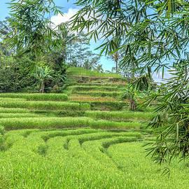Joana Kruse - Jatiluwih - Bali