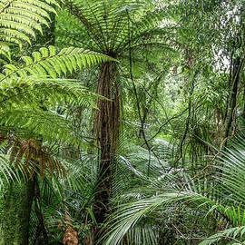 Jungle ferns - Les Cunliffe
