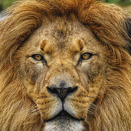 King Of Beasts by Bill Dodsworth