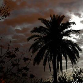Mustapha TAABA - Laghouat Moon