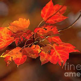 Darren Fisher - Leaves