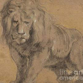 Peter Paul Rubens - Lion