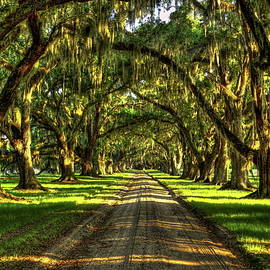 Live Oaks Of Tomotley Plantation South Carolina Low Country Art by Reid Callaway