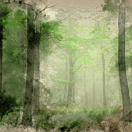 Matthew Gibson - Lush green fairytale growth concept foggy forest landscape image