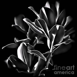 Walt Foegelle - Magnolia Leaves