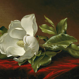 Magnolia  - Martin Johnson Heade