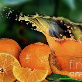 Shirley Mangini - Orange Splash