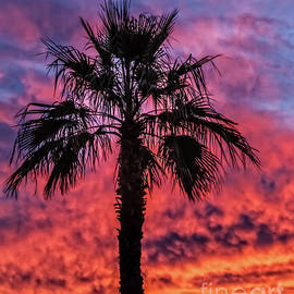 Robert Bales - Palm Tree Silhouette