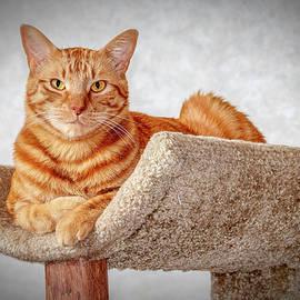 Doug Long - Red Cat