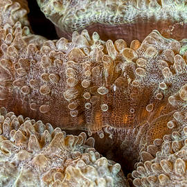 Henry Jager - Reef Art - Stony Coral