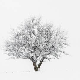 Paul MAURICE - Snowy tree