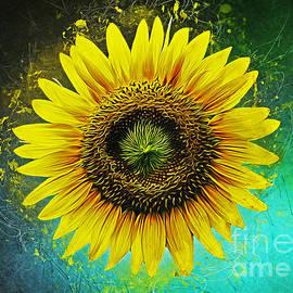 Ian Mitchell - Sunflower
